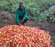 La banque nationale de la Guinée Équatoriale  accompagne  et finance de la plus belle manière  qui soit , près d'une trentaine de regroupements dans le secteur agro -pastoral et de la pêche !!!
