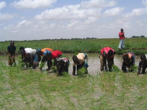 Sécurité alimentaire: l'Afrique doit se doter d'une gouvernance foncière pour protéger ses terres