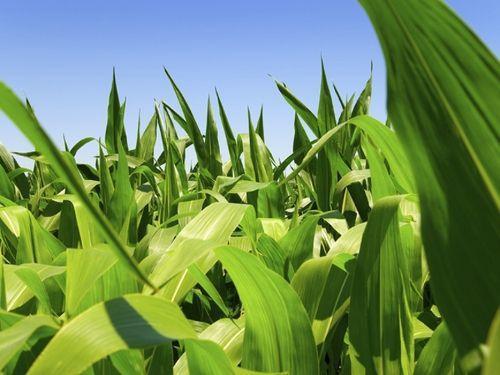 Les IDE dans l'agriculture ont doublé sur les 15 dernières années (étude)