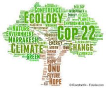 COP22-Forêts : Des progrès observés dans plus de 120 parties pour réduire la déforestation