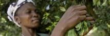 COP 23 : l'initiative Forêt de l'Afrique centrale relancée à Bonn en Allemagne