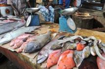 Le Cameroun importe 100 milliards de francs CFA de poisson par an
