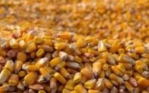 Congo RDC : Carence alimentaire: Lubumbashi alimentée en maïs des localités environnantes