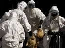 La Ceeac veut une extension de l'Organisation mondiale de la santé animale en Afrique centrale