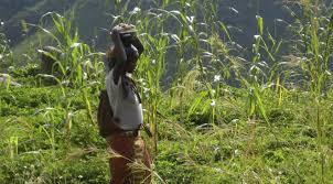 L'Afrique centrale place la transformation structurelle au cœur des plans de développement
