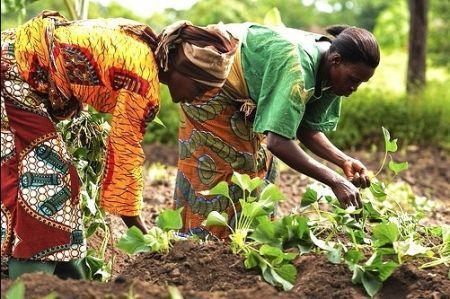 Le Fonds d'appui africain pour le développement va booster l'entrepreneuriat féminin dans l'agriculture
