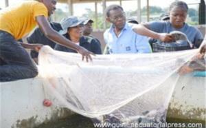 Diversification de l'économie : La BAD débloque plus de 55 millions d'euros au profit de la Guinée Equatoriale