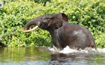 Biodiversité en Afrique : il n'y a pas de guerre  en Guinée Equatoriale pour en provoquer la perte !