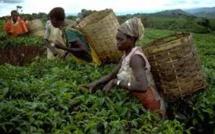 Insécurité alimentaire en hausse: l'Afrique soutient trop peu son agriculture