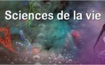Cérémonie de remise du Prix international Unesco-Guinée équatoriale pour la recherche en sciences de la vie