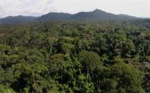 Bassin du Congo: les forêts naturelles pourraient disparaître d'ici à 2100